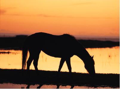 horse-wetland