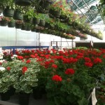 This week's horticulture tip from University of Missouri Extension