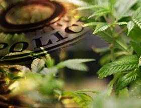 MarijuanaPolice-Featured2013
