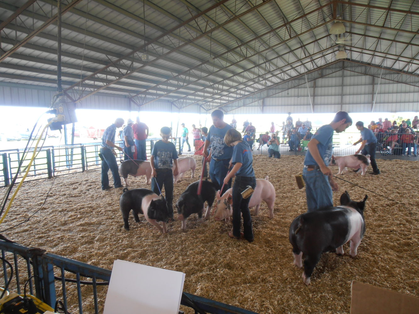 2014 Johnson County Fair Swine Show Participants - Photo Courtesy of Johnson County MU Extension