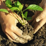 Gardening workshop to be held in Kirksville, MO