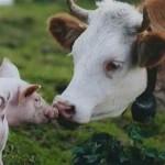 U.S. pork exports solid, beef exports trend lower