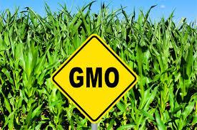 GMO bill, not yet in Senate