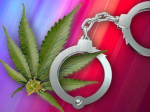 generic-marijuana-grow3