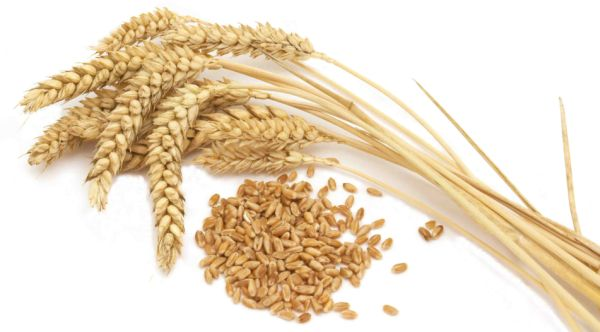 Wheat Feature
