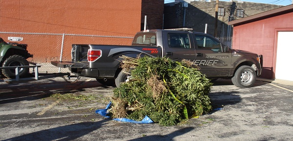 Henry Co. Marijuana Plants Discovered