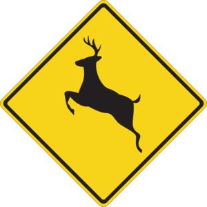 Man in serious condition after striking deer in roadway