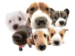 Carrollton Dog Clinic