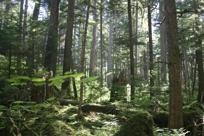 USDA Forest Service raises awareness for national picnic month