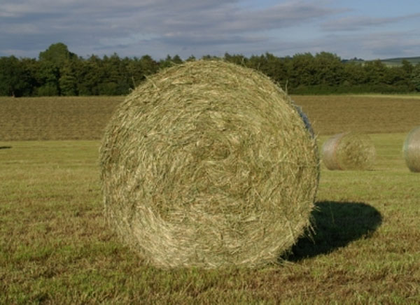 Residents of Cameron Missouri indicted for fraud in hay-selling scheme spanning 10 states