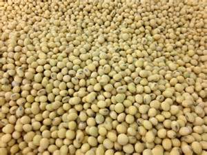 NEWSMAKER — Market analyst predicts south Asia will become the next big market for soybeans