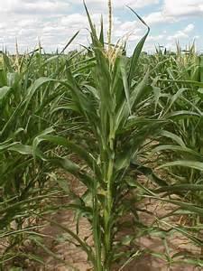 Missouri Corn and FFA members create agriculture HYPE