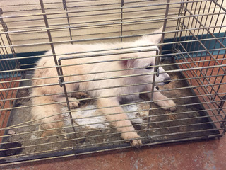 Almost 50 dogs removed from alleged Oak Grove puppy mill