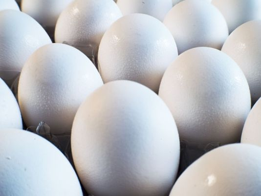 Department of Health discovers Salmonella at Missouri egg facility