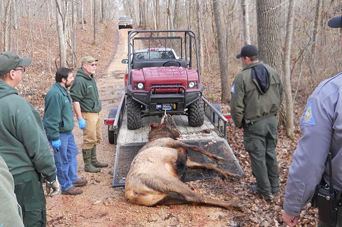 Reward grows for information in death of elk in Missouri
