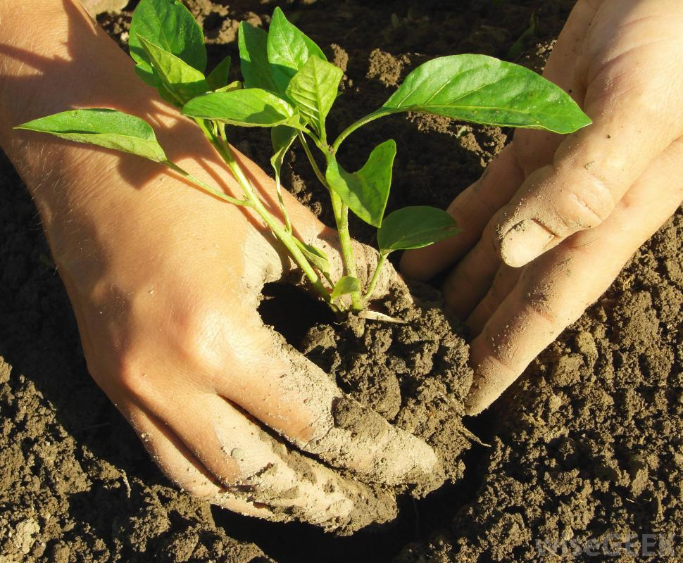 Gardening workshop to be held in Kirksville