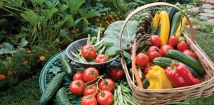 organic-gardening-tips2