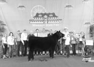 Record-Breaking 2016 Missouri State Fair Sale of Champions
