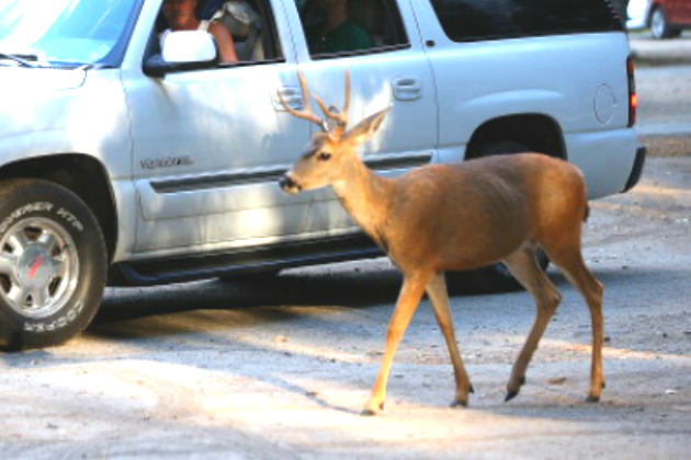Orrick driver hits deer in Clay County