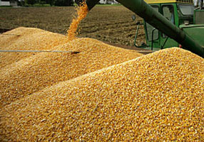 corn-piles