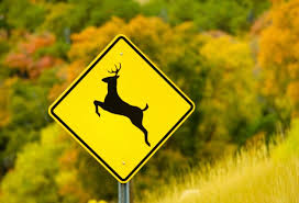 Deer in roadway causes injuries to two Saline County residents