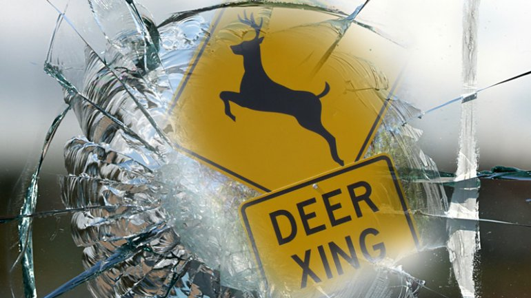 Passenger treated for minor injuries after deer hit in Clinton County