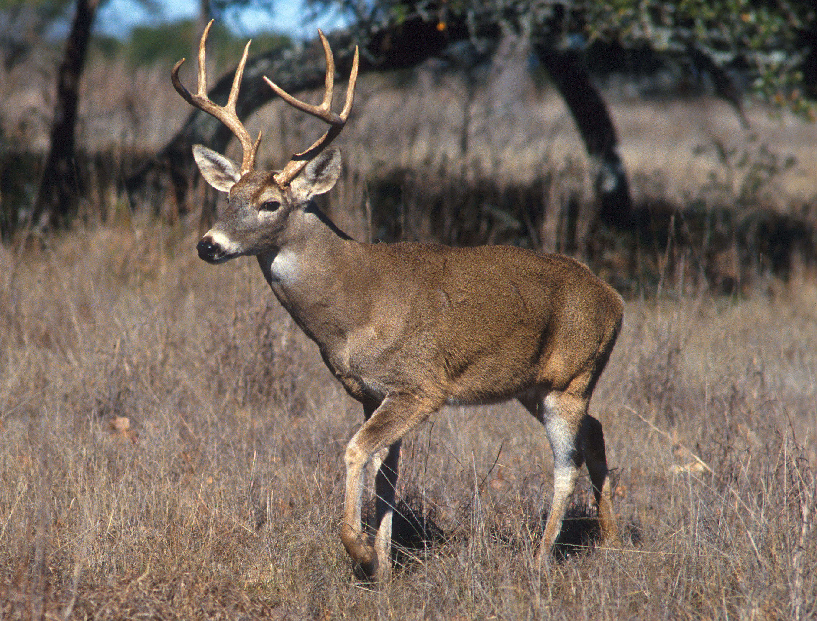 Chronic wasting disease detected in seven more counties