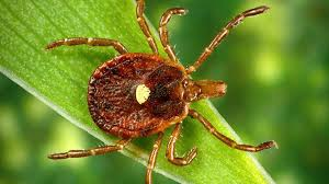 NEWSMAKER — Tick diseases in Missouri are higher than normal