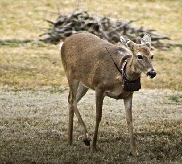 NEWSMAKER — Local deer populations at risk for CWD