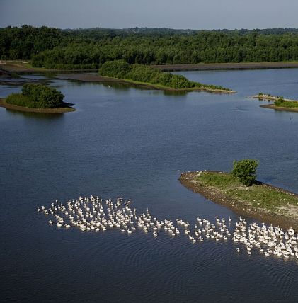 Swan Lake restoration project commencing