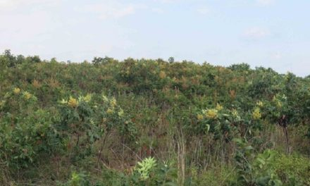 MDC landowner permits to have new acreage requirements for 2020