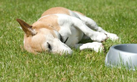 Keep your furry friends cool and safe during the dog days of Summer