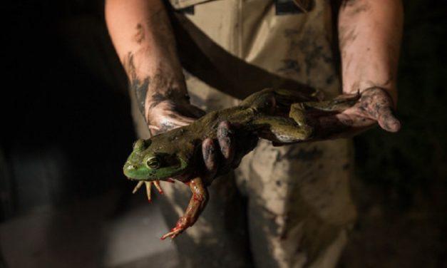 Make a splash this summer during frogging season