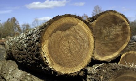 Multiple walnut timber thieves arrested by MDC