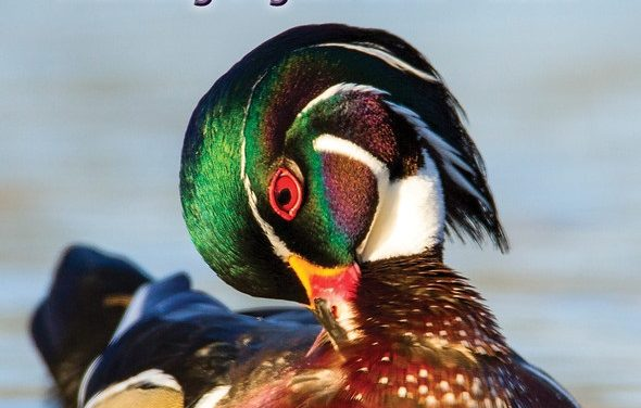 New MDC guide highlights bird and waterfowl hunting