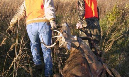 New deer carcass regulations set for 2020 to combat CWD
