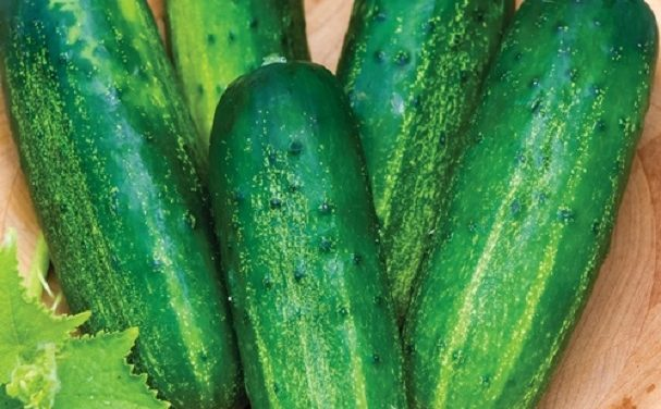 Downey mildew can kill cucumber crop