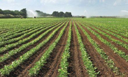 Clarksdale farmer latest to be sentenced in grain fraud scheme