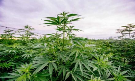 Heart of America Agricultural Hemp Classic conference open to Midwest growers