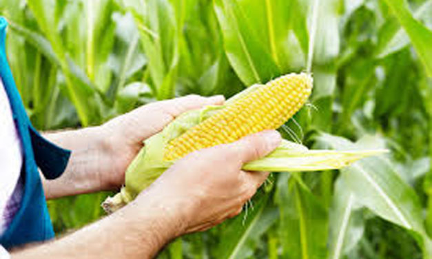 NEWSMAKER: High-octane ethanol, new corn products the path forward, NCG president says