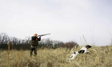 MDC sets deer and turkey hunting dates for upcoming seasons