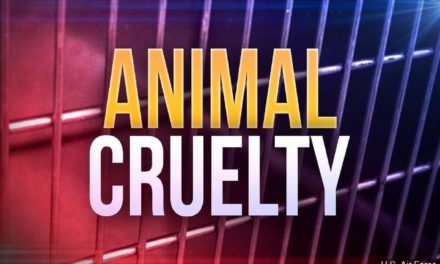 Two Chillicothe residents charged with animal abuse after neglecting horses