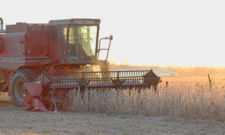 NEWSMAKER: Soy's silver lining: global demand still remains high