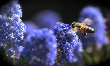 MDC invites families to Youth Pollinator Event Feb. 29 at Columbia golf course