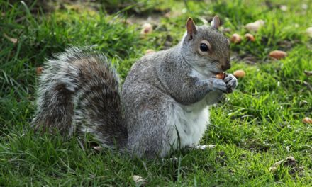 MDC offers nature's version of March Madness on March 26 in St. Joseph