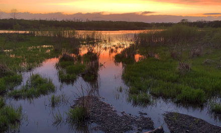 Celebrate Missouri wetlands during American Wetlands Month in May