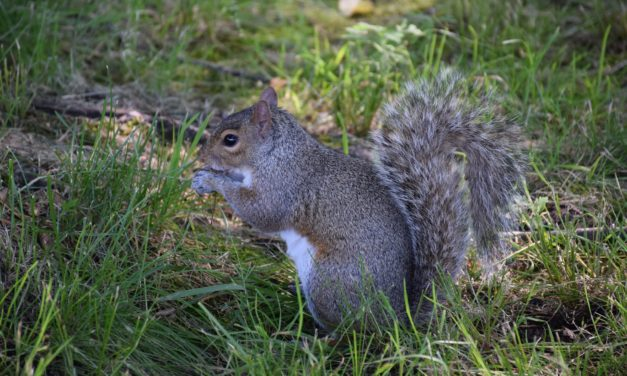 MDC reminds Missourians squirrel and black bass seasons open Memorial Day weekend