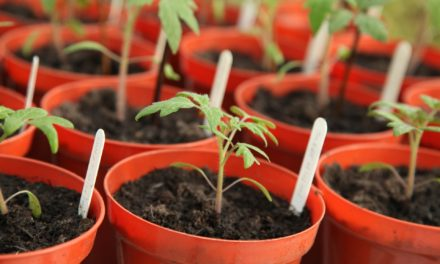 Grow your own veggies to ease COVID-19 financial stress