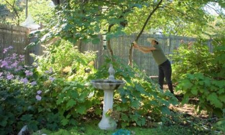 Join MDC webcast July 1 to learn about attracting backyard wildlife