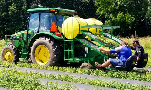 NEWSMAKER: Lexington's Hemp Hill strives for another successful crop